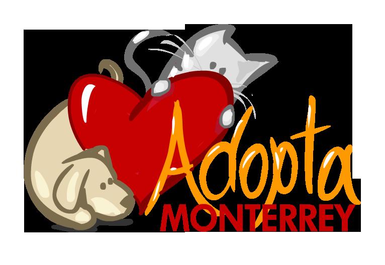 Adopta monterrey